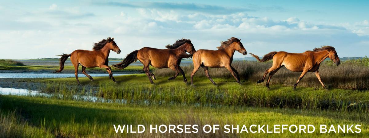 1200x450_Beaufort_Horses.png