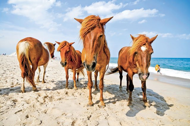 assateague-pony-08132012_fe.jpg