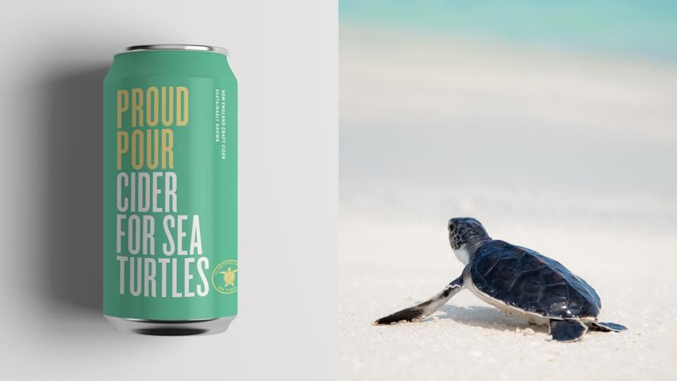 cider-sea-turtle-big