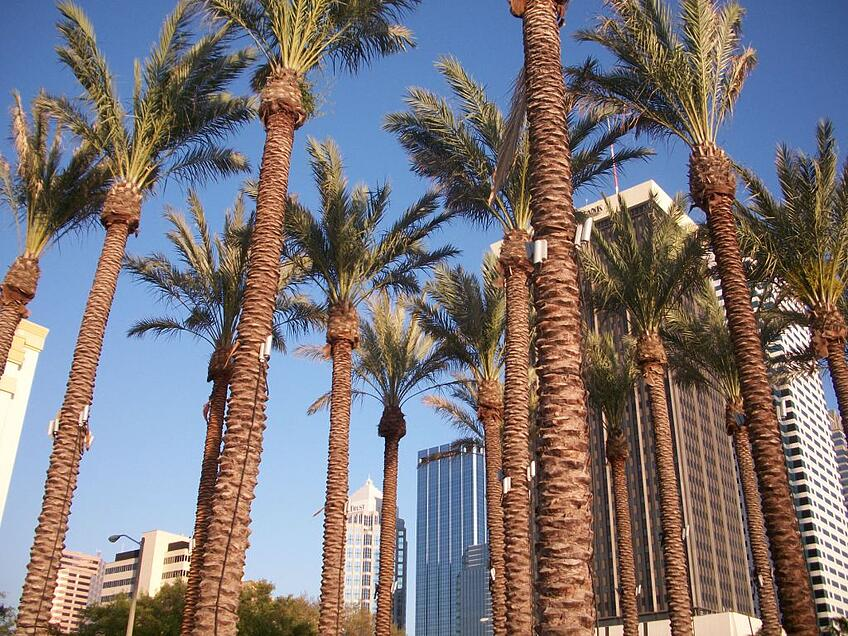 palm-trees-tampa