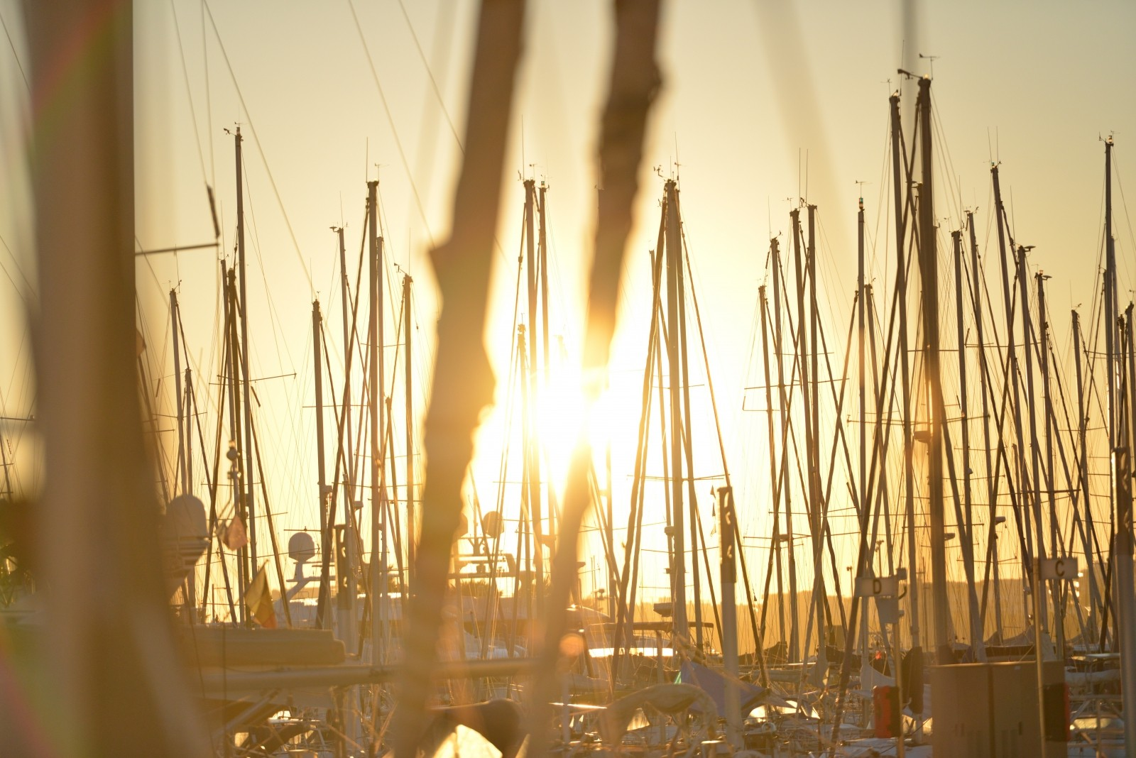 masts_thanksgiving_marina
