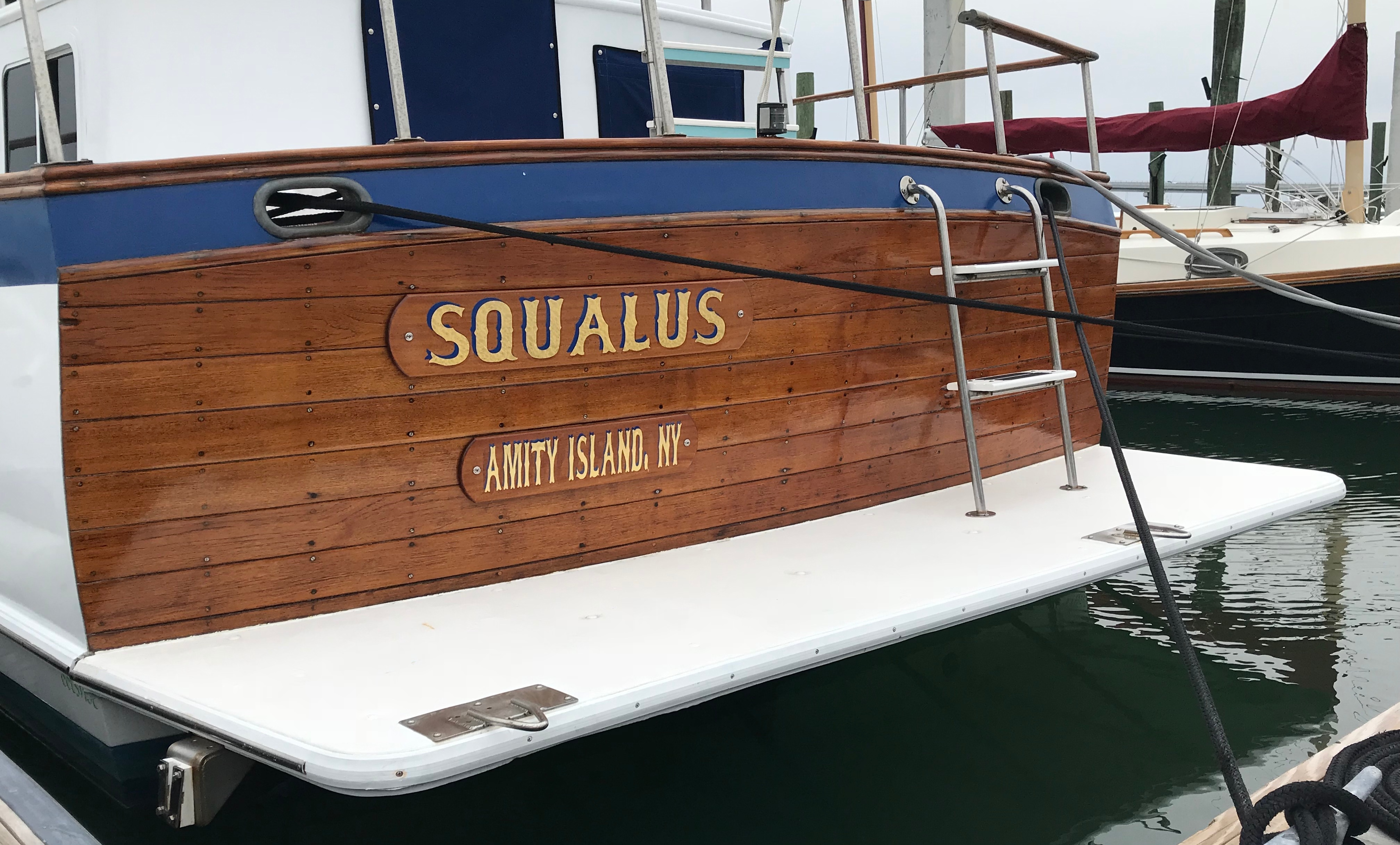Squalus-1.jpg